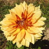 Septembre en fleur