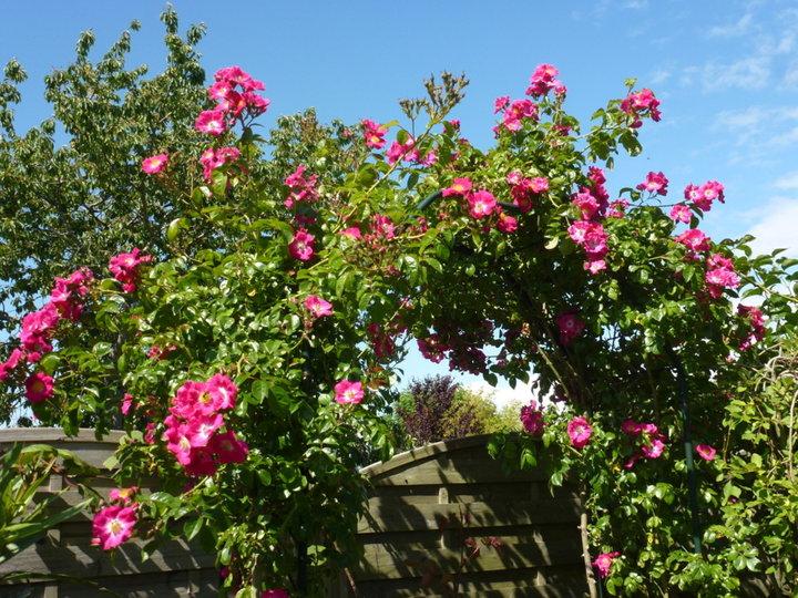 Dimanche 8 juin 2014 - Soleil ciel bleu et 26° - Qui dit qu'il ne fait jamais beau en Bretagne !