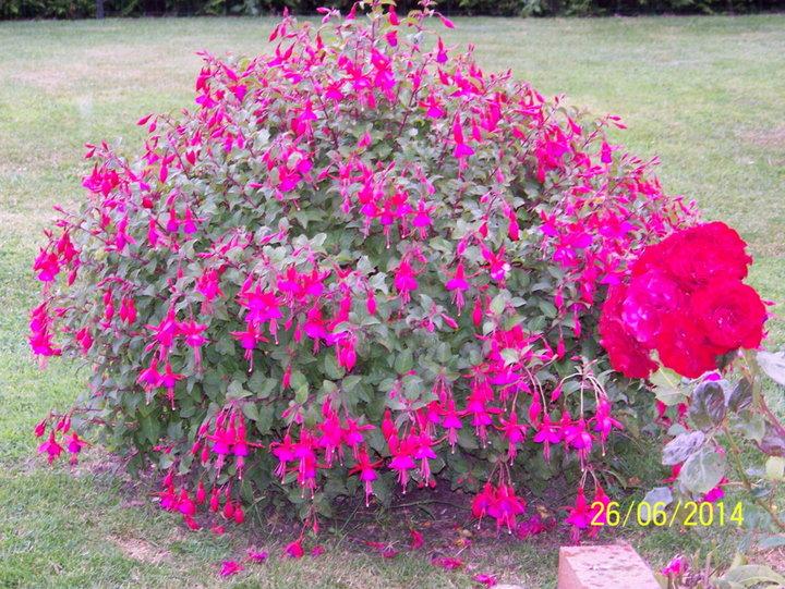 fleurs de l'ANN2E 2014