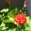 1ere experience avec les fleurs