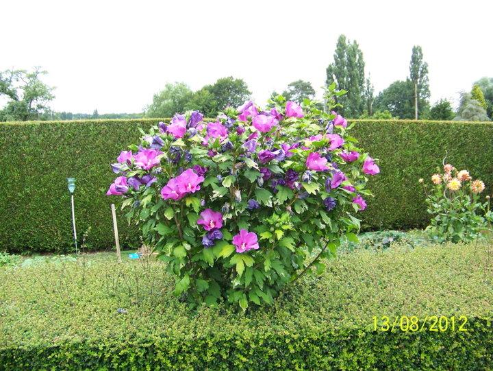 fleurs et arbustes d'Ornement - Album photos mon jardin
