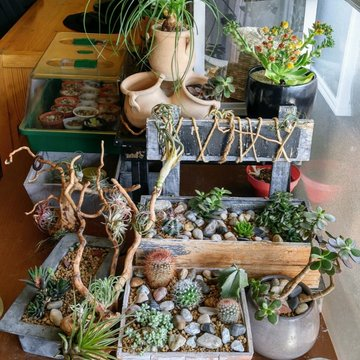 ma petite collection carmilla album photos mon jardin. Black Bedroom Furniture Sets. Home Design Ideas