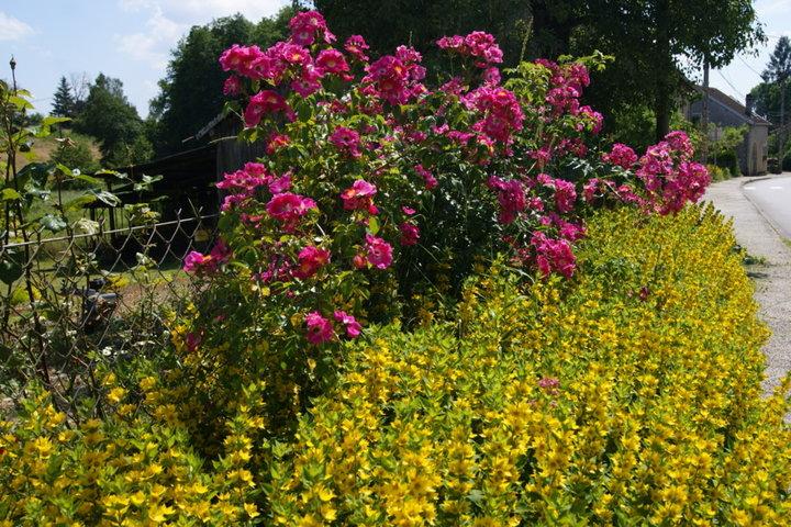 Juin en couleur album photos mon jardin for Derriere les murs de mon jardin