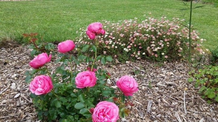Le jardin de juin album photos mon jardin for Derriere les murs de mon jardin