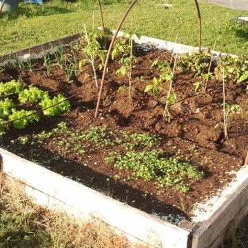 quelques jours plus tard album photos mon jardin. Black Bedroom Furniture Sets. Home Design Ideas