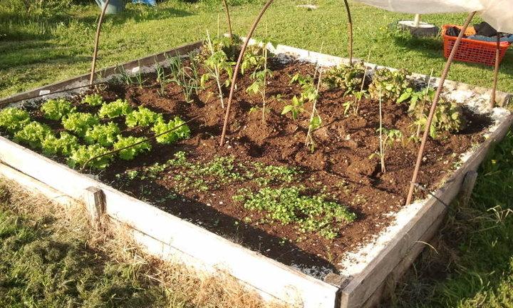 Quelques jours plus tard album photos mon jardin - Petit jardin potager carre ...
