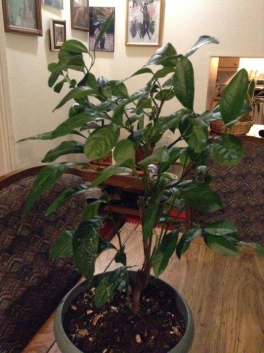 mes plantes d 39 interieur machouka8 album photos plantes fruits et l gumes. Black Bedroom Furniture Sets. Home Design Ideas