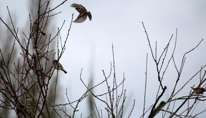 Animaux de la nature album photos animaux for Oiseau commun