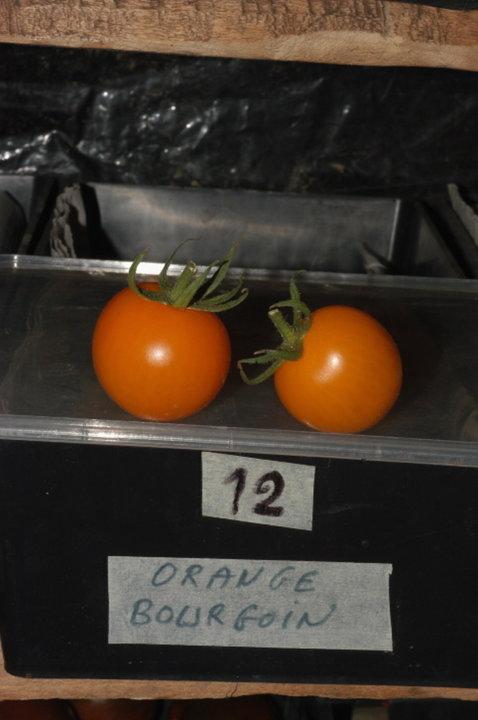 Orange bourgoin