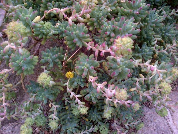 Fleurs du moment album photos mon jardin for Plante grasse arbuste