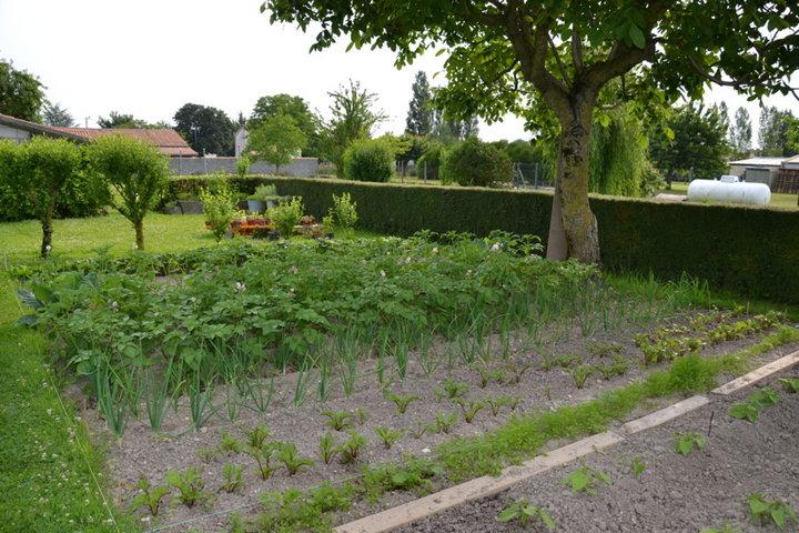 Pommes de terre pompadour, oignons, betteraves rouges et carottes (dans les herbes)