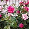 Quelques unes de mes fleurs