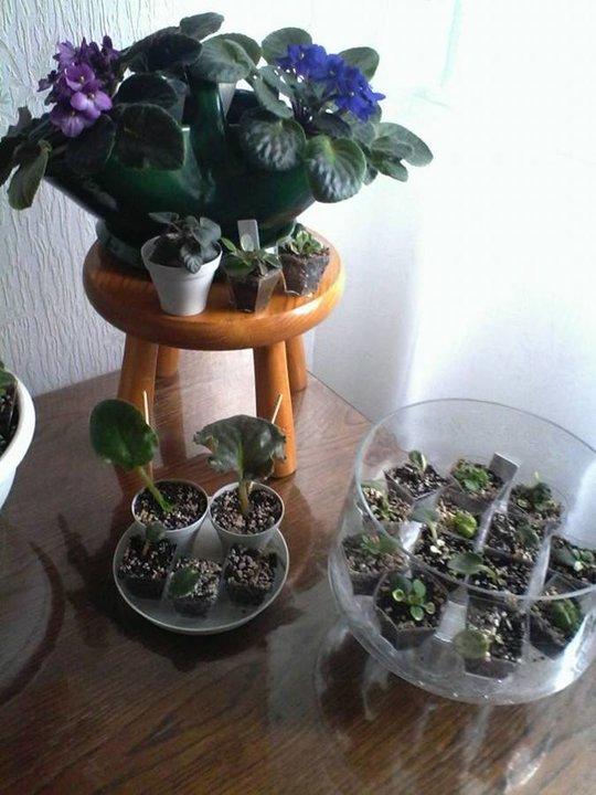Plantes vertes album photos plantes fruits et l gumes for Recherche sur les plantes vertes