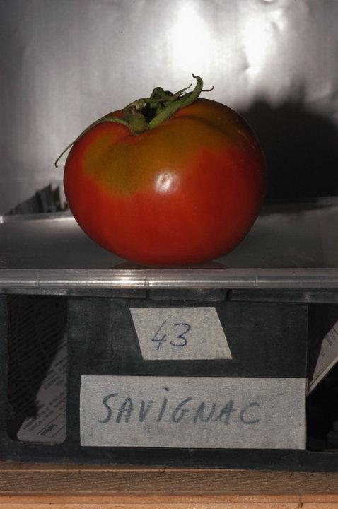 Savignac