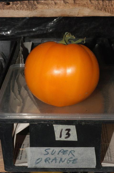 Super orange