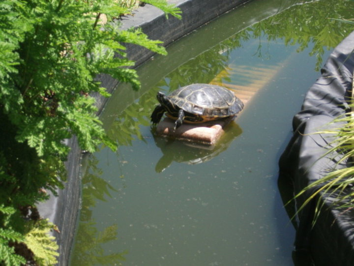 Titine la tortue