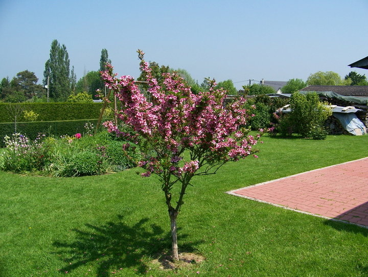 Fleurs et arbustes d 39 ornement album photos mon jardin for Arbustes de jardin
