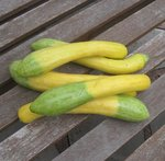 Courgette 'Zephyr'