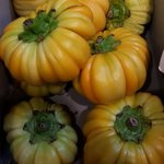 Jacato - Solanum aethiopicum
