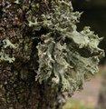 Lichen et mousse