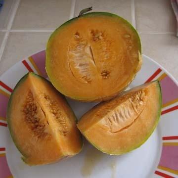 Quand claircir les melons espagnols - Quand cueillir un melon ...