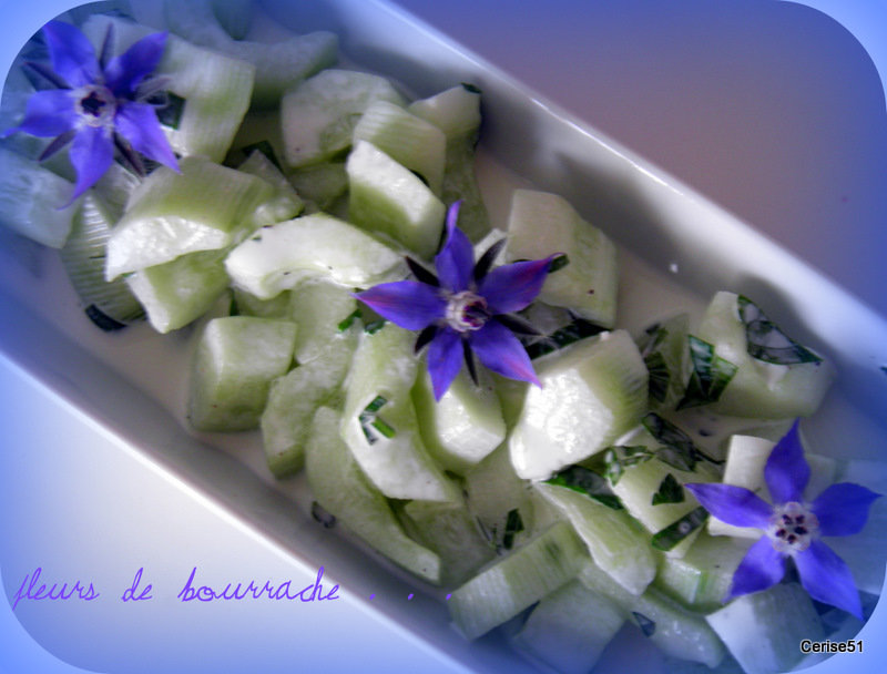 Bourrache borago officinalis for Entree vite faite simple