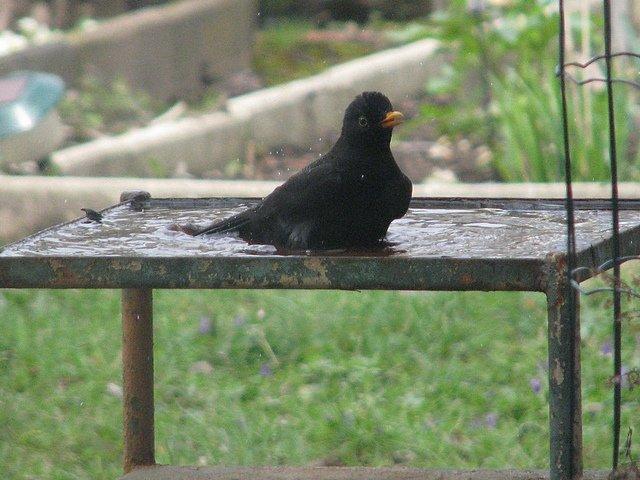 Sondage avez vous une baignoire pour les oiseaux dans for Baignoire oiseaux jardin