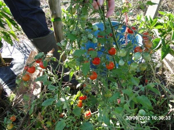 Septembre que faire au jardin - Que faire au jardin en septembre ...