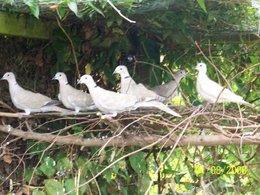 animaux  et volaille de basse courpetits