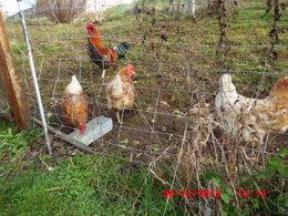 Traitement pr ventif cloque du p cher page 4 forum jardinage - Cloque du pecher traitement naturel ...