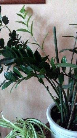 plantes d'intérieur nom inconnu
