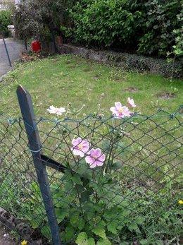 quel est cette fleur vue en Alsace