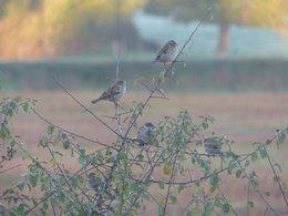 oiseaux de vos jardins