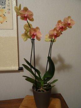 Cultivez-vous des orchidées ?
