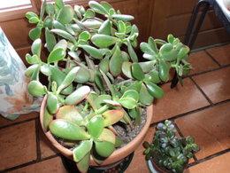 plante inconnue