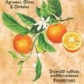 31e Journées de l'Arbre, de la Plante et du Fruit (ST JEAN DU GARD, 30)