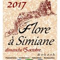 Flore à Simiane (SIMIANE LA ROTONDE, 04)