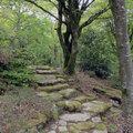 Les Jardins de Treuscoat (SCAER, 29)