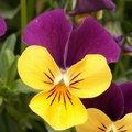 Quelles fleurs semer ou planter en juin au jardin ?