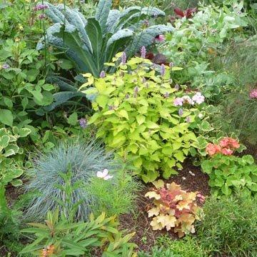 Gestes de jardinage en ao t for Jardins de jardiniers