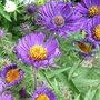 Octobre - Gestes et travaux de saison au jardin