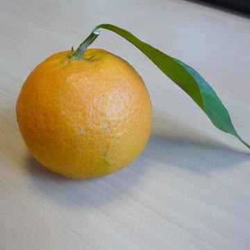 L gumes et fruits consommer en d cembre - Legumes de saison decembre ...