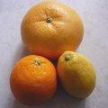 Février : fruits et légumes de saison