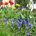 Le jardin de jardinier-amateur au printemps