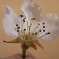 Qu'est-ce que la fécondation des fleurs ?