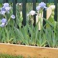 Des idées de bordures au jardin