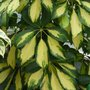 Plantes dépolluantes : efficaces ou pas ?