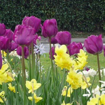 Planter les bulbes de printemps la bonne profondeur - Bulbes a planter au printemps ...