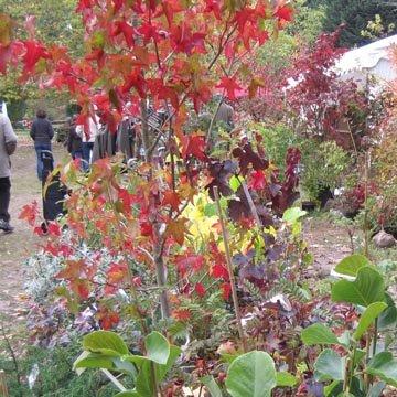 F te des plantes d 39 automne courson essonne - Fete des plantes courson ...