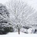 Dégâts de la neige sur les arbres